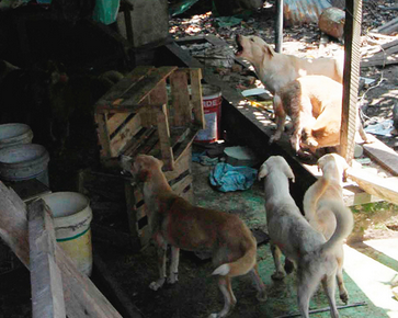 The dogs that were unfed for 2 weeks, before attacking their owner