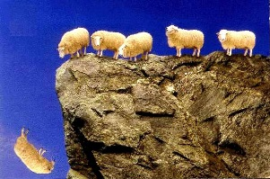 In 2005 in Turkey, a suicide sheep jumped off a cliff and 1500 sheep  followed the first one