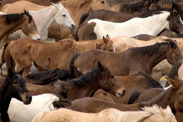 Road Herd