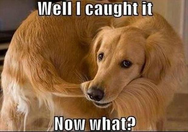 dog-catches-his-tail