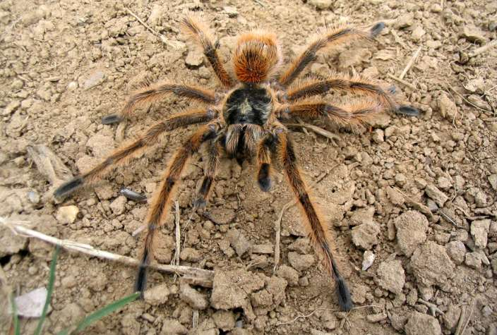 The Biggest Spiders In The World Factual Facts