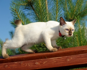 cat-balancing