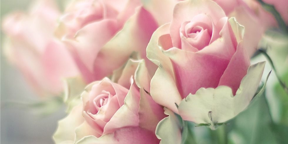Facts about roses for Do black roses really exist