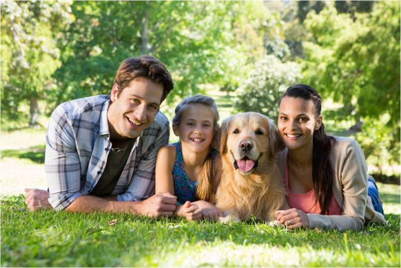 golden-retriever-family-dog