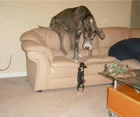 dog on sofa looking down at cat