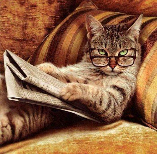 https://imgflip.com/memetemplate/55062543/Smart-Cat