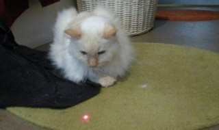 http://www.theglobaledition.com/cats-evolve-realize-its-just-a-laser-pointer/